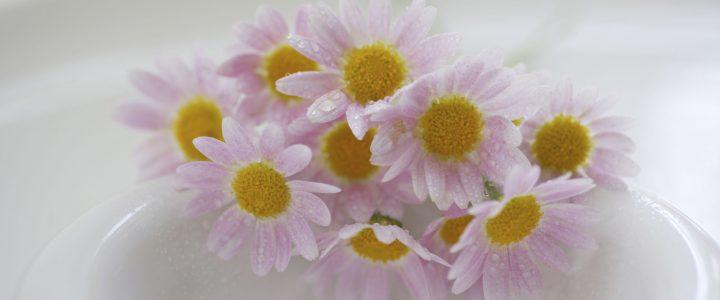 Az őszi margitvirág szív- és érrendszert érintő hatásai