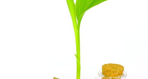 Az egyik legerősebb antioxidáns a kurkumában található!